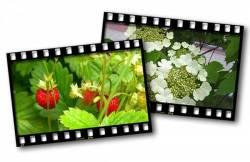 журнал о фотографии, интересные факты о фотографии